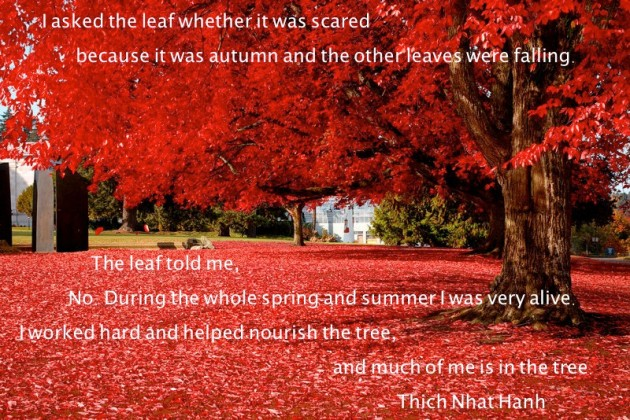 Thich Nhat Hanh gives an uncommon perspective.