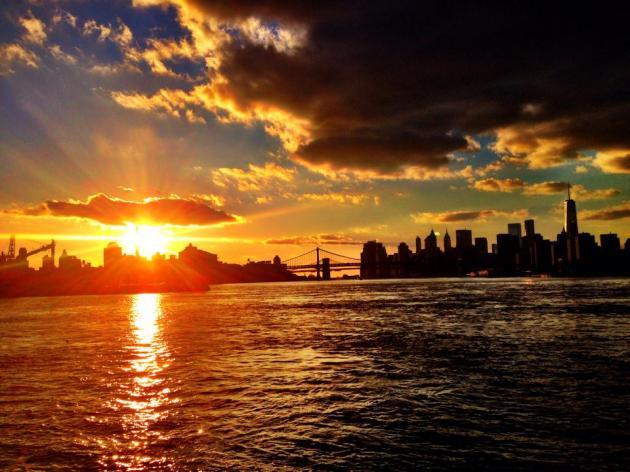 CityFox Sunset